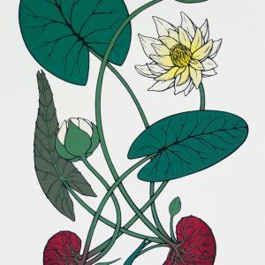 Tonja Torgerson, waterlilies print